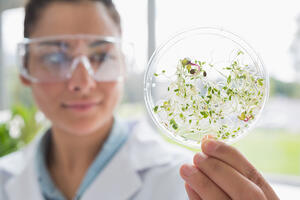 Chemist holding a pane with tests of plants in laboratory